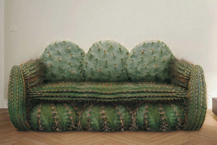 cactus-couch
